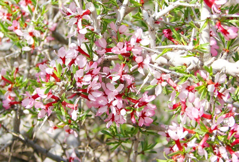 Mugworts in Khar Turan National Park
