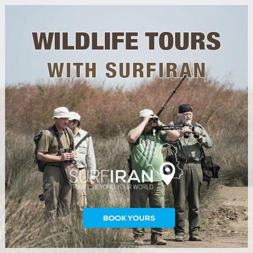 Khar Turan National Park, Shahrood, Semnan, Iran