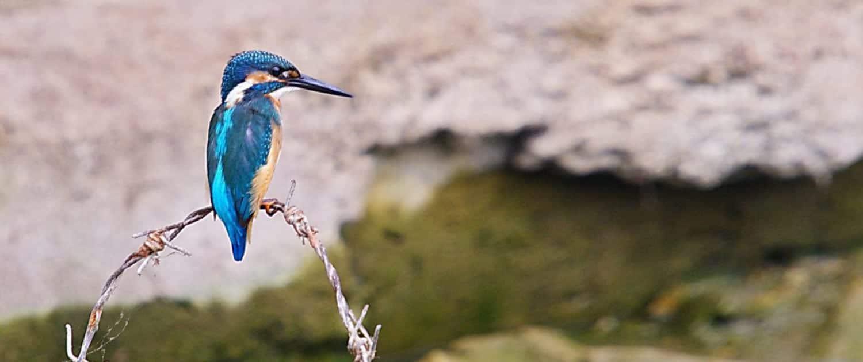Iran Birdwatching tour by SURFIRAN
