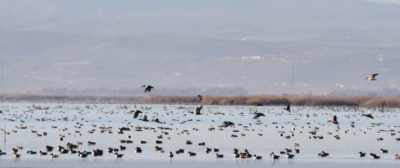 Miankaleh Peninsula ‒ A Heaven For Bird Watchers