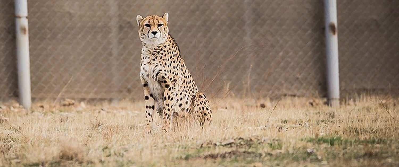 Wildlife Tour at Khar Turan National Park