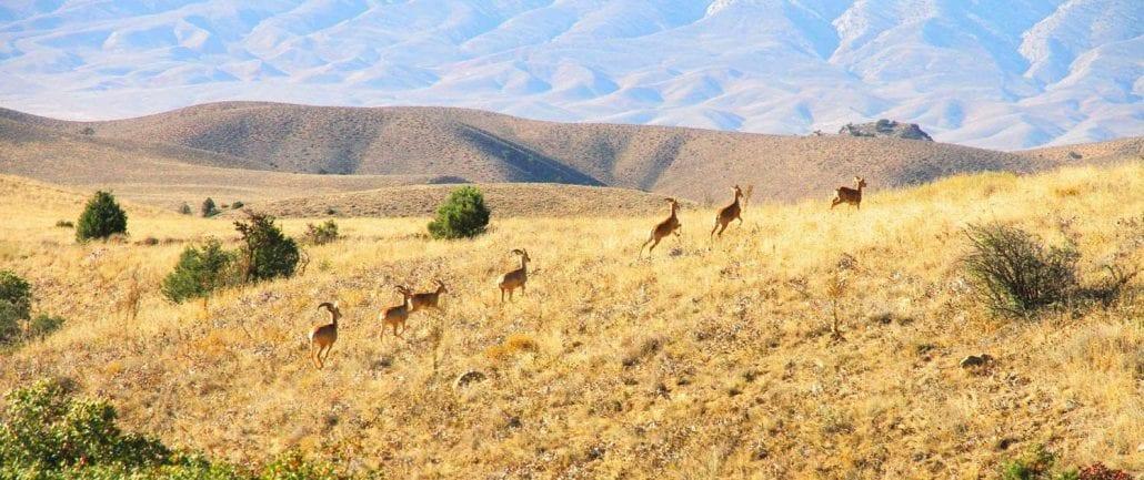 Golestan National Park – Hiking and Trekking Tour