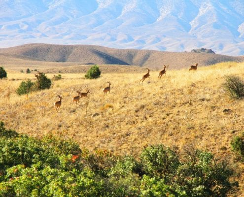 Golestan National Park Tour with SURFIRAN