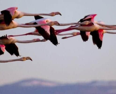 Iran Bird Watching Tours Iran Birding Tours