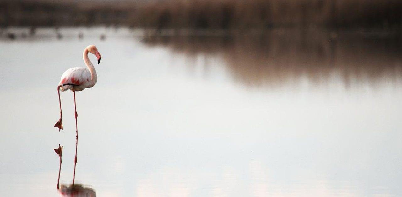Flamingo–MiankalehPeninsula