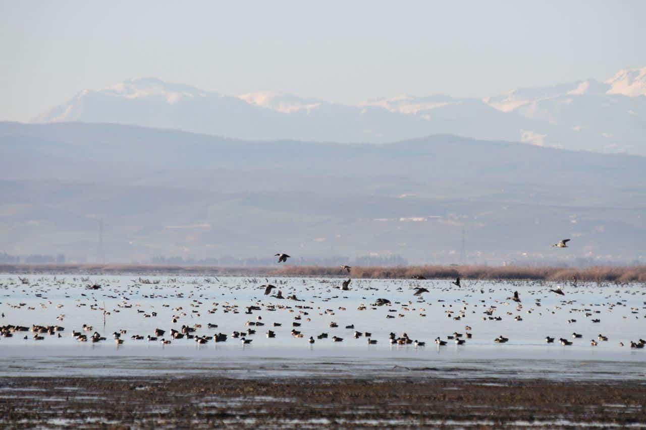 Miankaleh Wetland – Miankaleh Peninsula