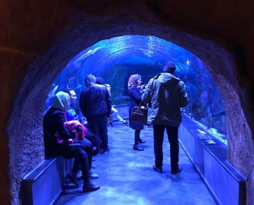 The Largest Aquarium Tunnel in Iran Opens in Bandar-e Anzali - SURFIRAN