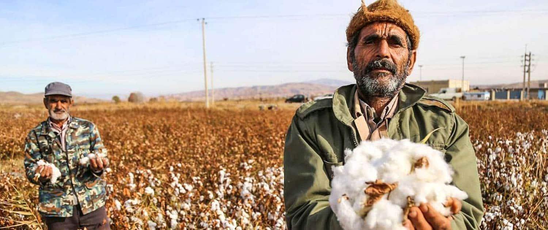 Cotton Harvesting in North Khorasan, Iran