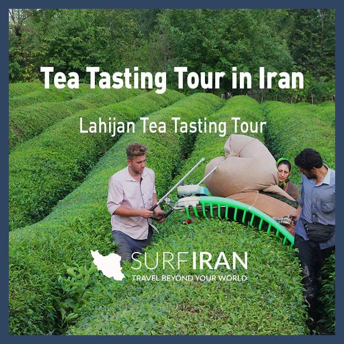 Iran's Lahijan Tea Tasting Tour