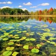 The Wonderland of Anzali Wetland - Visiting Anzali Lagoon - SURFIRAN