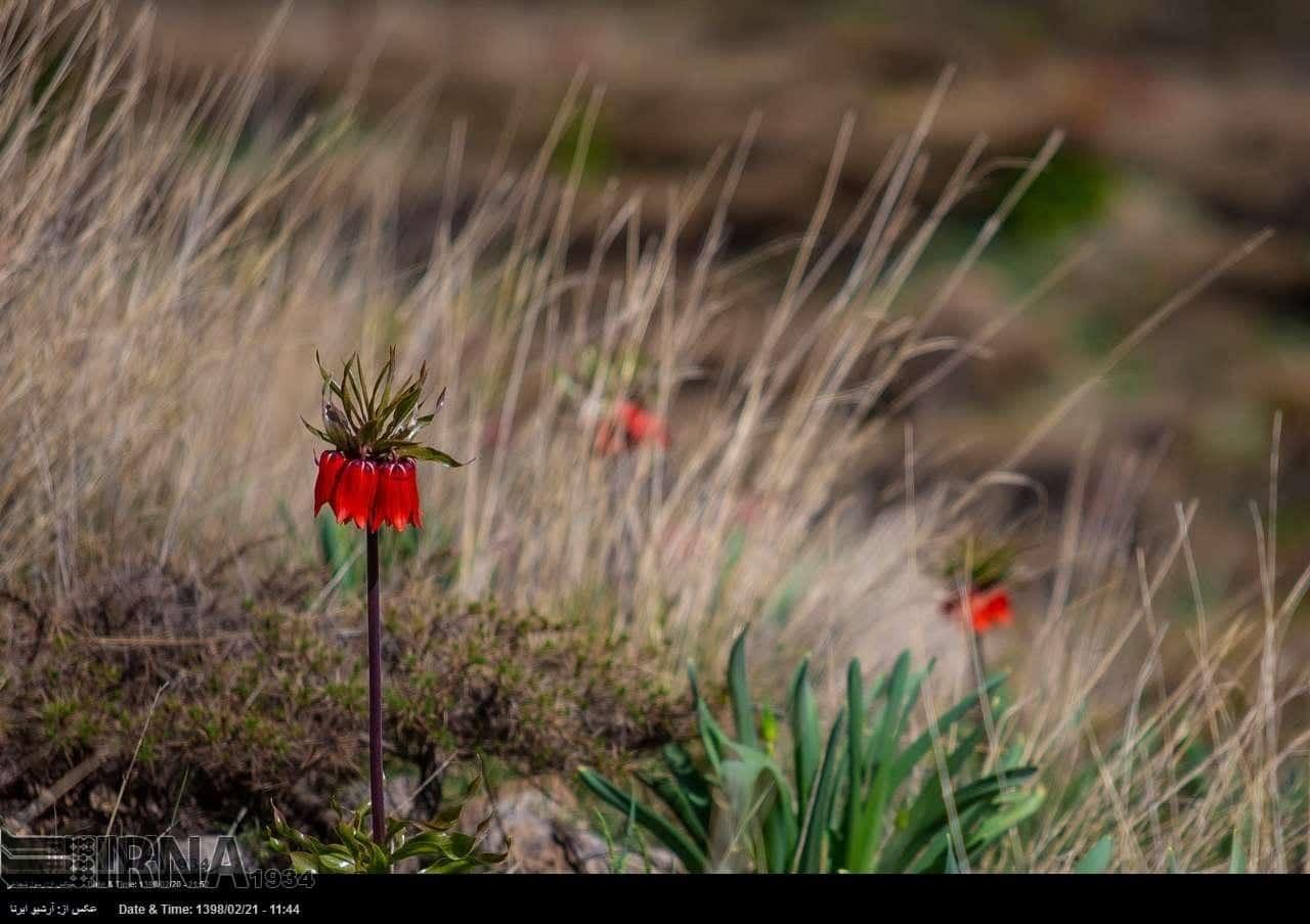 Reverse Tulips