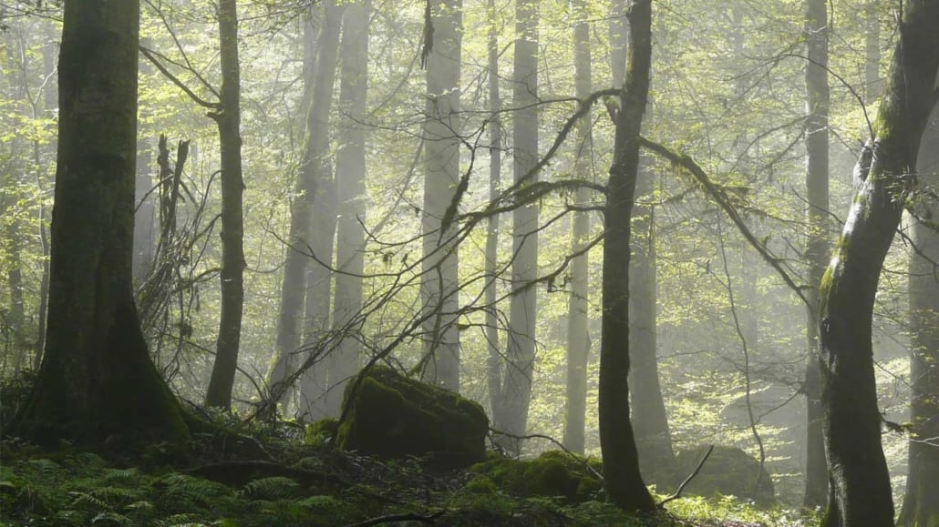 Iran's Hyrcanian Forests