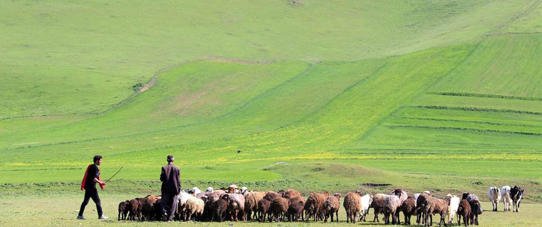 Moghan in Iran