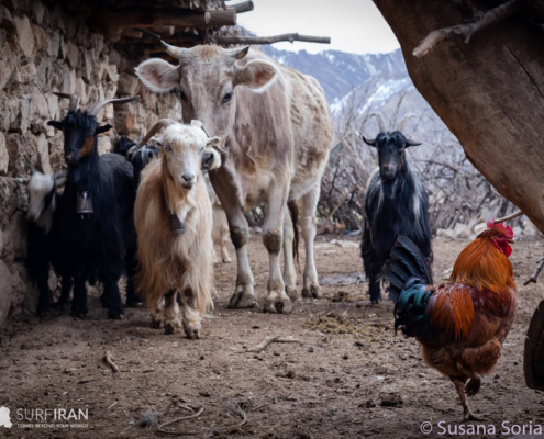 Nomadopedia, Travel with Iranian Tribes
