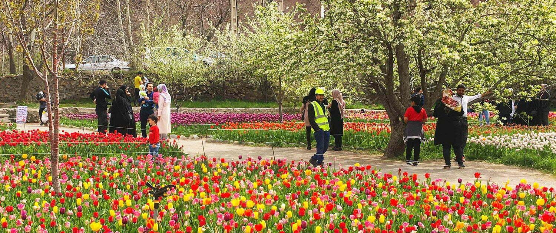 tulip festival gachsar